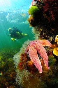 Specialisatie onderwaterbiologie in Nederland