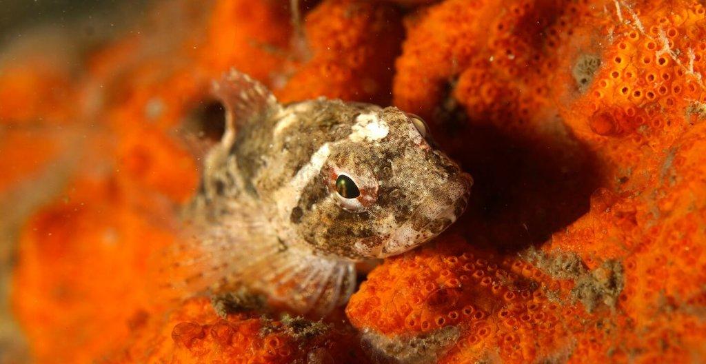 Onderwaternatuur