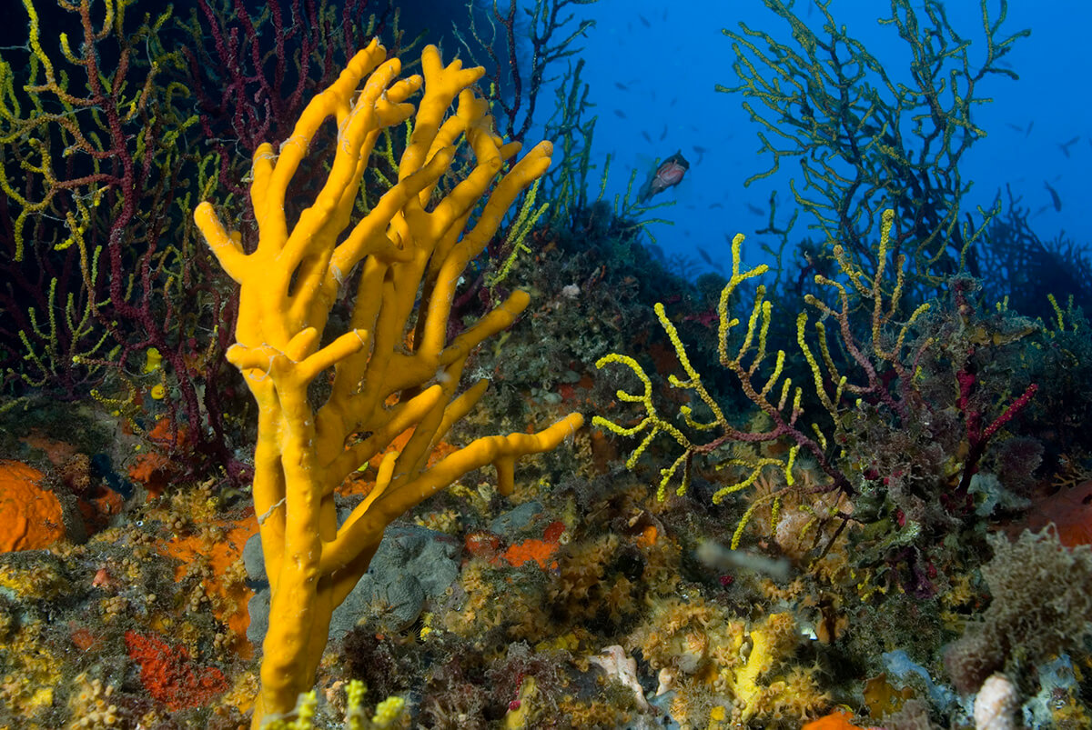 Onderwaterbiologie over de hele wereld