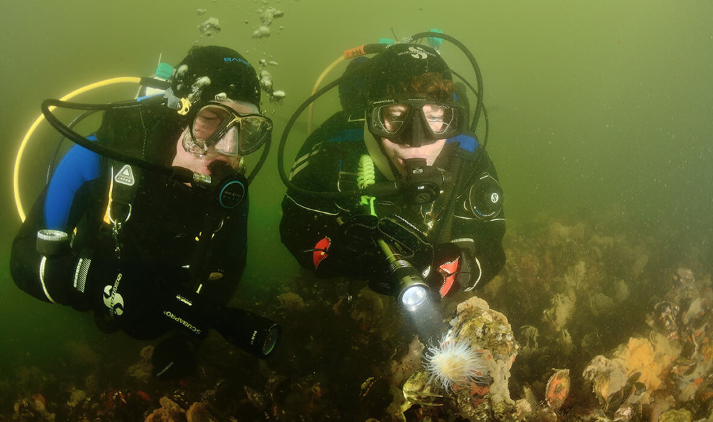 ECO-diver