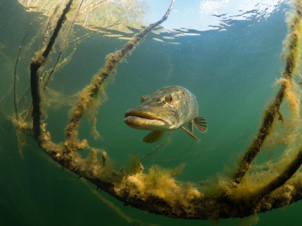 Onderwaterfotografie, kies je standpunt goed